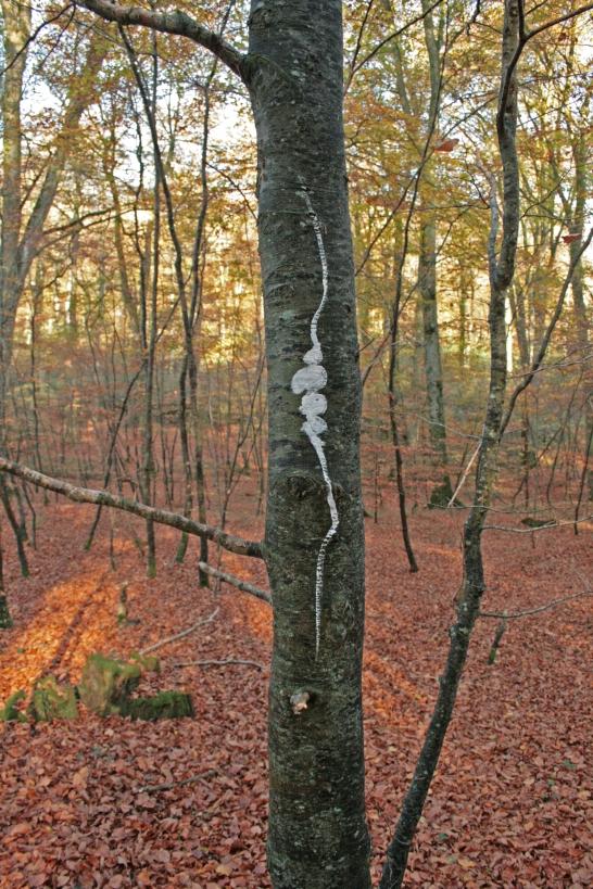 sans titre (foret de Montfiquet3), impression jet d'encre, tirage à 10 exemplaires, 20x30cm, 2011